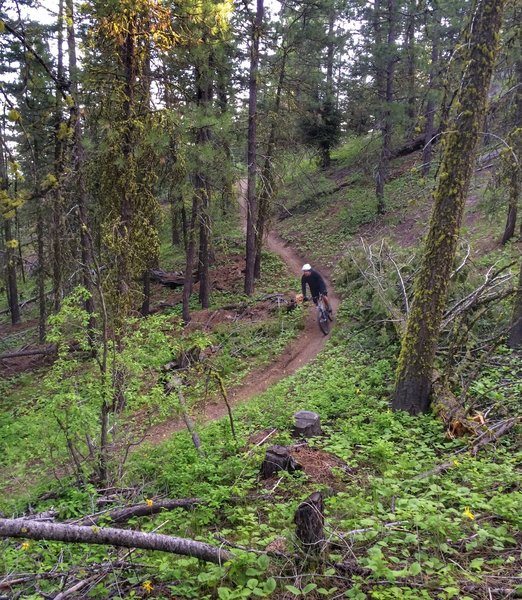 Eagle's Nest can be pretty lush in the spring; it gets drier and looser late in the summer.