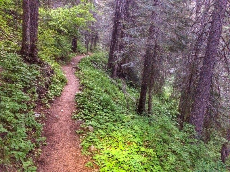 A smooth, loamy section of the Goose Creek Trail, the below the falls.
