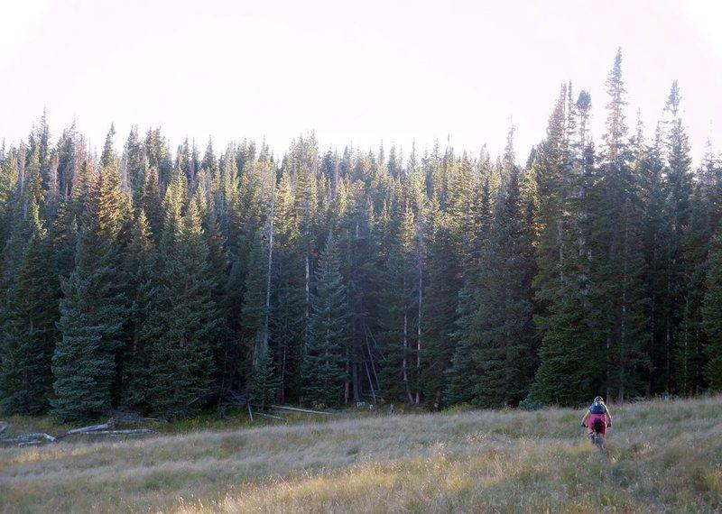 Meadow riding prior to breaking through treeline.