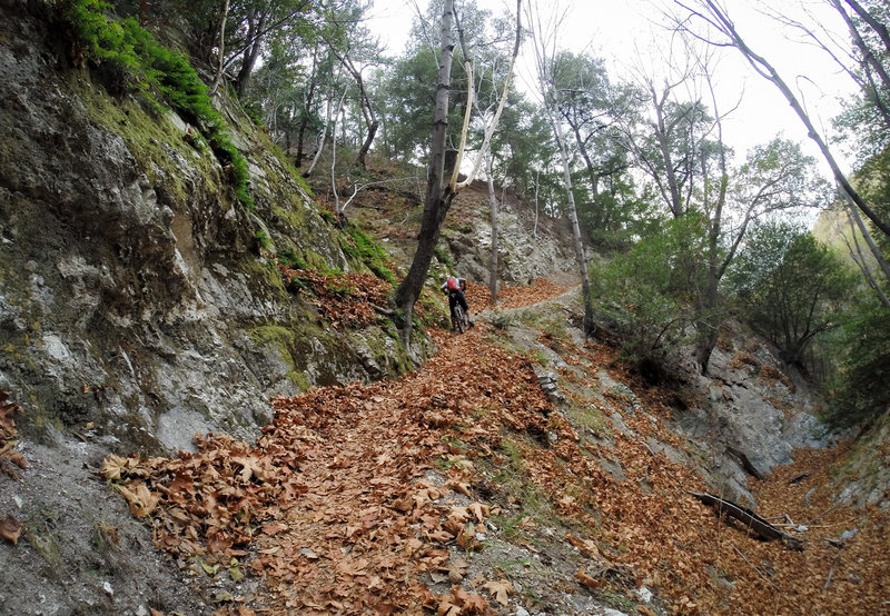 The climb from the campground up to Mt. Wilson Toll Rd is somewhat steep (and slippery when littered with damp leaves :) )