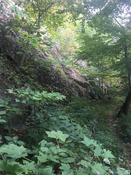 Blockstand Creek Trail.