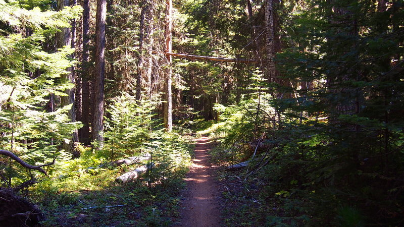 Start of the Surveyor's Ridge Trail from the southern trailhead.