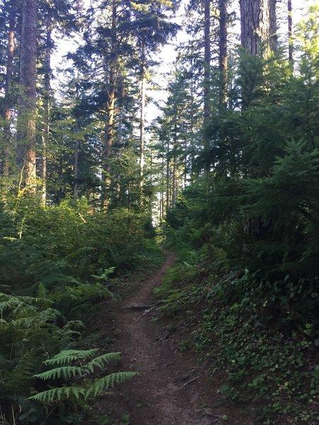 Classic Western Oregon riding.