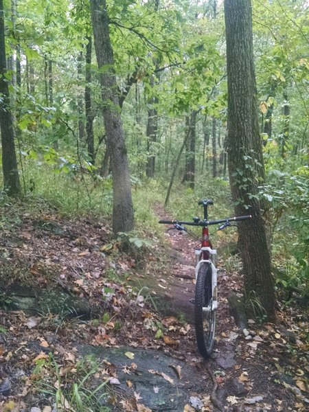 """Standard issue singletrack for the """"J"""" ..... fun, challenging texture for sure."""