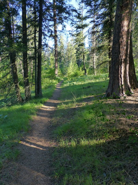 Mineral Point Trail 82, Lake Pend Oreille, Idaho.