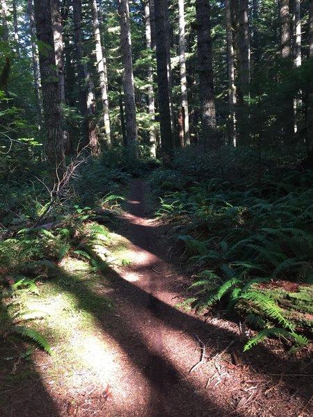Typical Perimeter Trail tread.