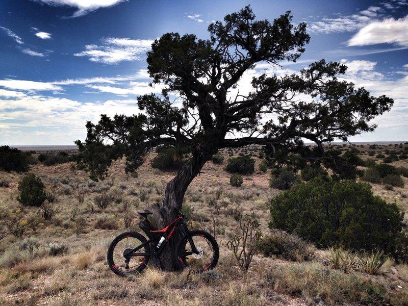 MTB tree of life