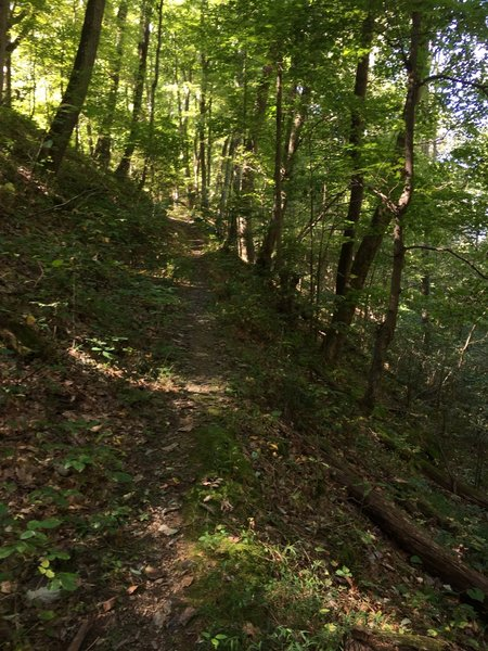 Last climb on Cross Ridges Trail prior to the intersection with footpath Cherry Knobs Trail at the top of the ridge.