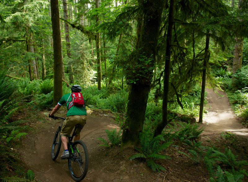 Pedaling into one of several valley dips on Ryan's Line at Duthie Hill Park, WA.