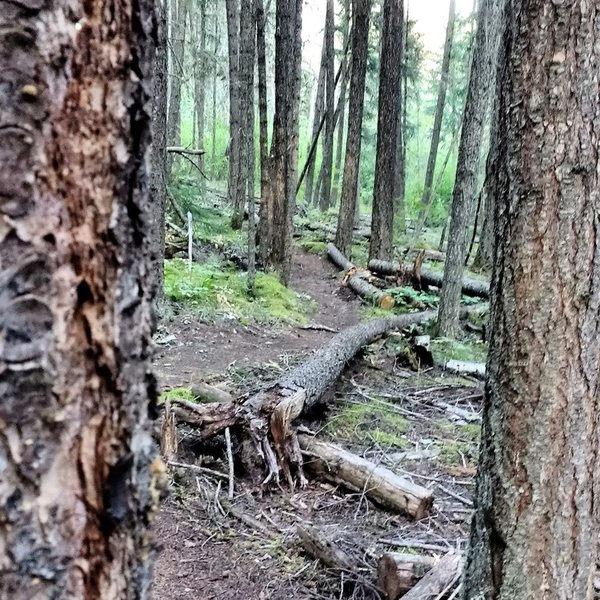 Trail features.