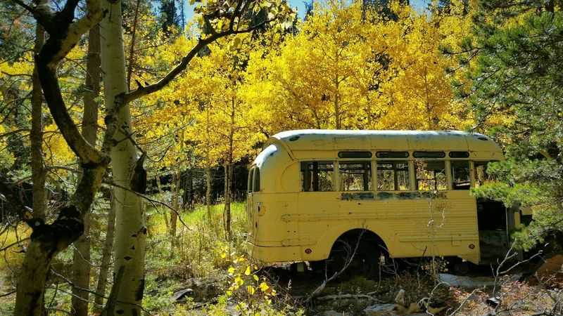 The school bus in fall!