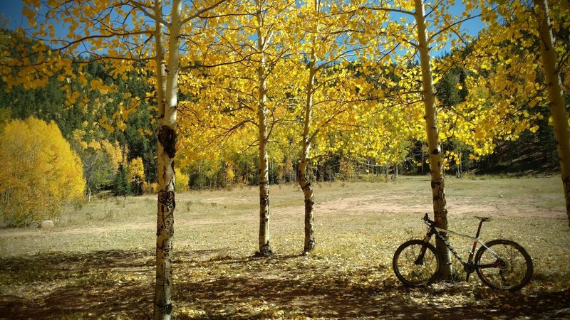 Autumn gold on the aspens catch the afternoon sunlight over a quiet meadow along FS 376.