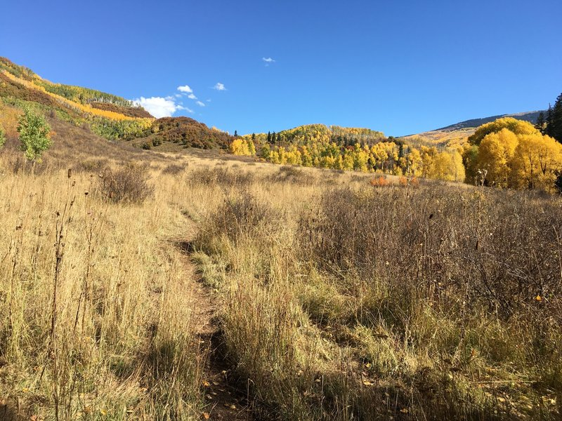 Meadow with fall colors.