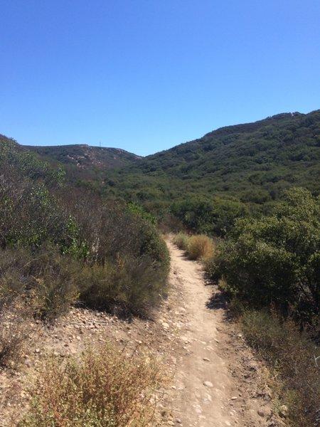 Singletrack heading through the hills.