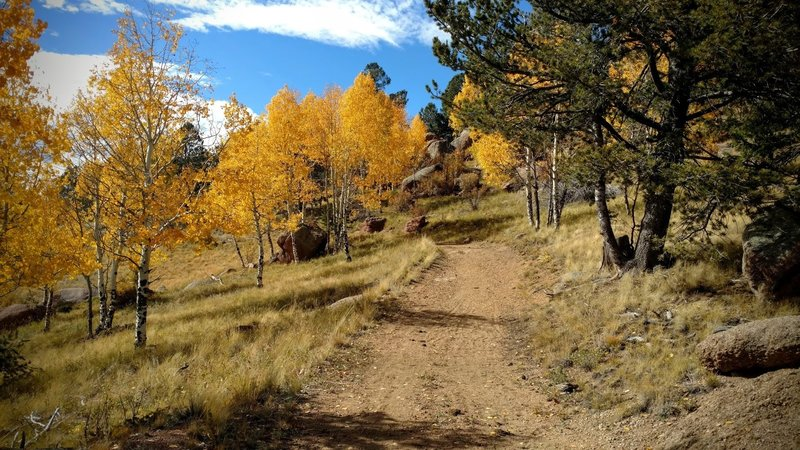 Autumn aspens glow in the October sun along the Homestead Trail.