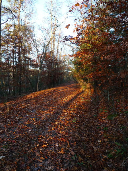 Lake Road covered in leaves in the waning light.