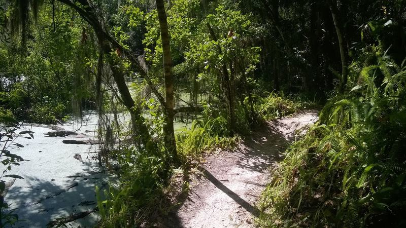 Bend right after Magic Island's exit bridge. Gator feature on the left.