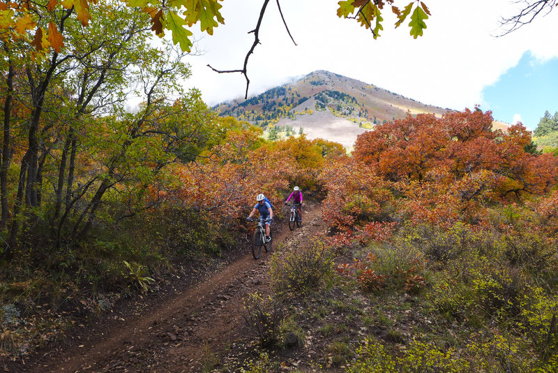 Beautiful fall colors from the ground scrub to the oaks and aspens.