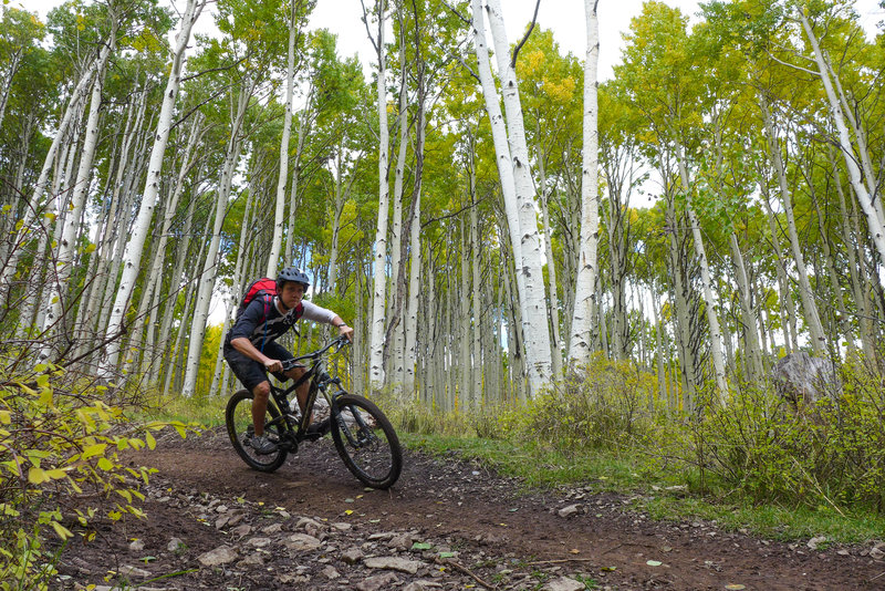 This downhill ride starts with a massive aspen grove.