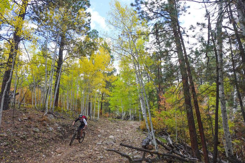 Ripping down the chunky Bulldog Trail.