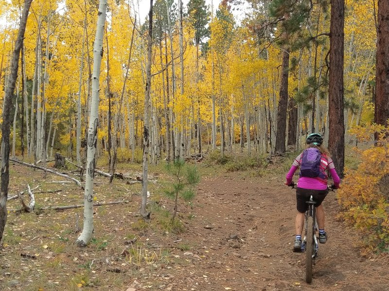 Entering a little aspen grove on Bulldog Trail.