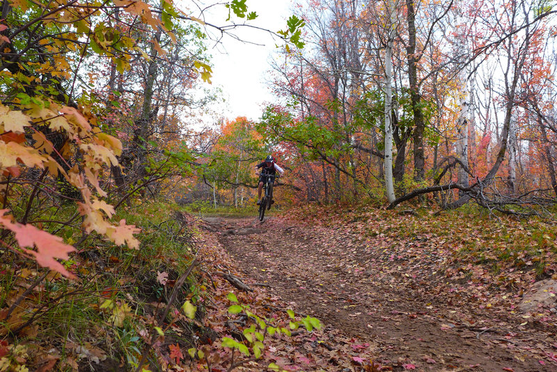 Getting rad in the fall forest.