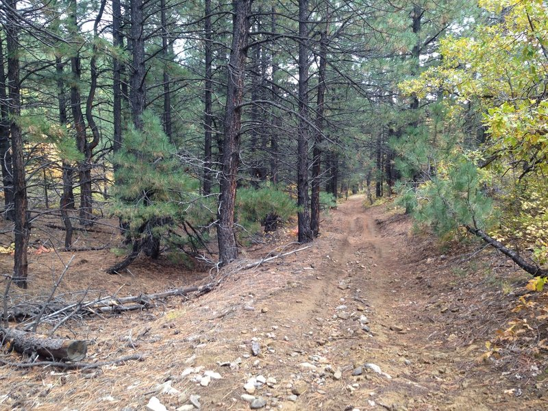 An easy section through the pines.