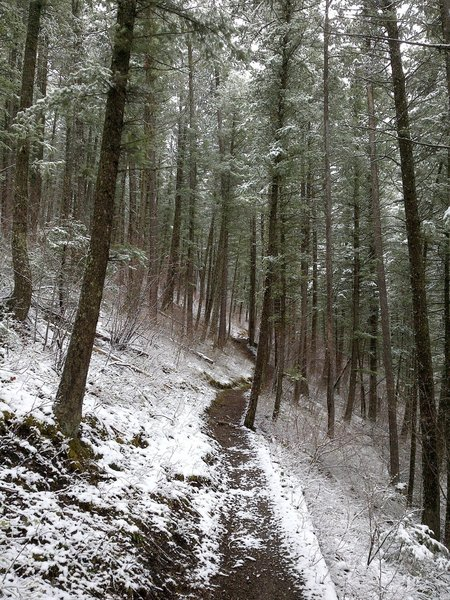 This is along the Garnet Mountain Lookout Trail (85).