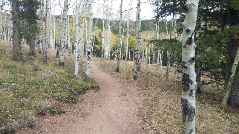 Early October aspens on Mason Creek Trail.