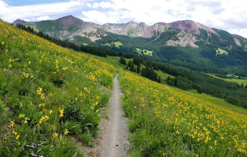 It is the blur of color from the wildflowers. Don't let the views distract you too much. Most scenic ride I have ever done!
