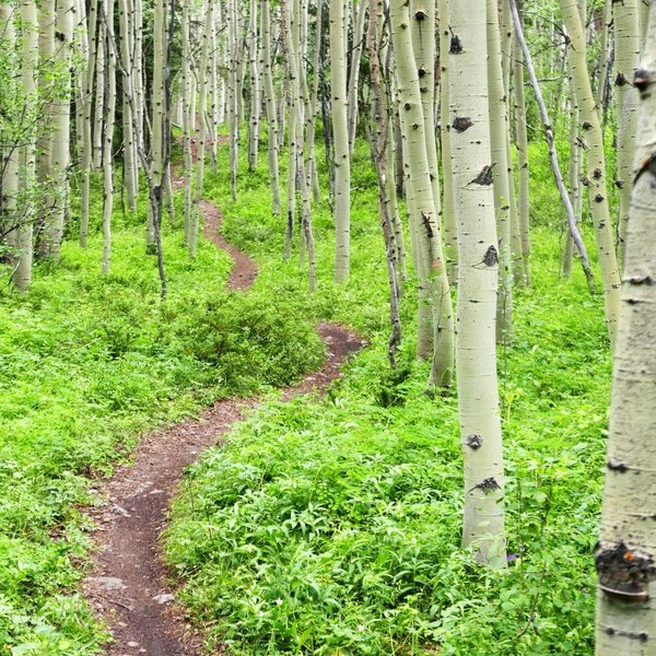 Loamy dirt, aspens, and singletrack - all you need on a bike ride.