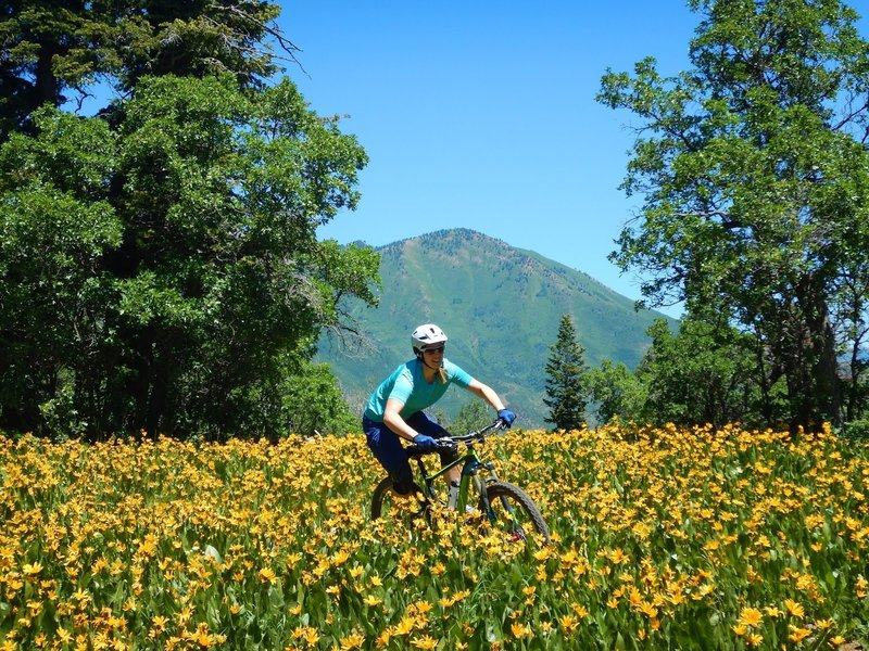 Time the wildflowers correctly and it becomes an epic ride!