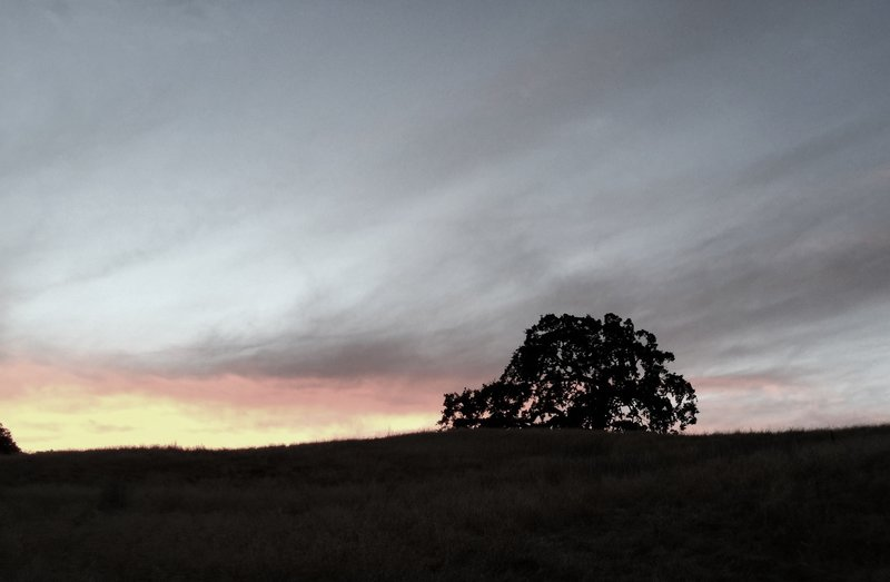 Arastradero Lone Oak. Night ride.