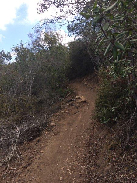 Switchback Trail.