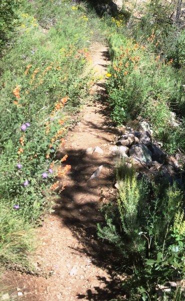 Angel Loop Trail NE side, end of summer wildflower extravaganza.