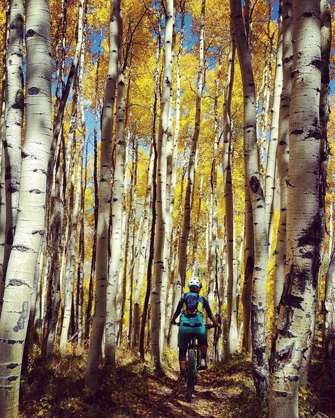 Beautiful aspens along the trail.