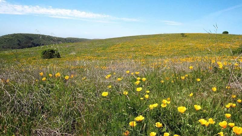 Wilder Ranch State Park from the Wilder Ridge Loop.