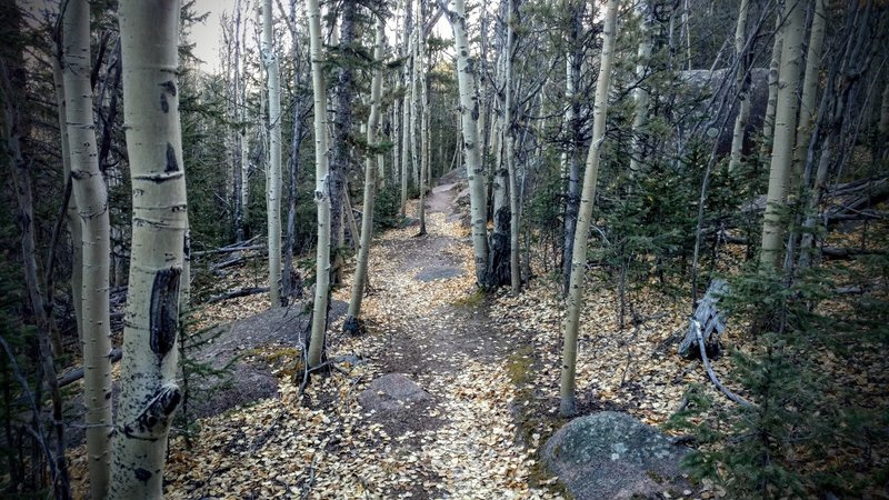New singletrack on Putney Gulch trail makes for a fun technical ride.