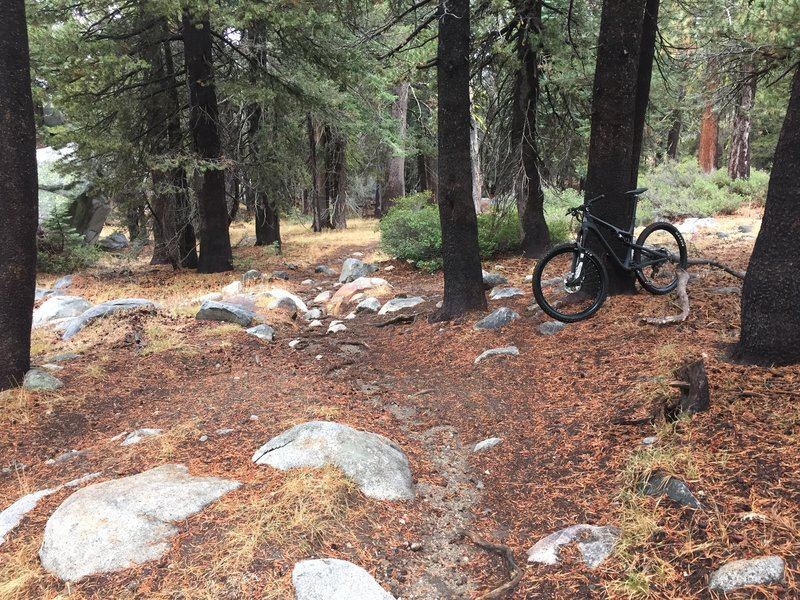 Typical singletrack for this ride.