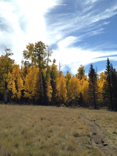 A view of aspen trees on the return ride back to the trailhead.