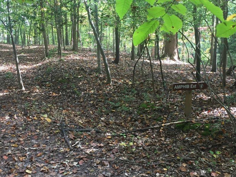 Amphib Extension - no trail.