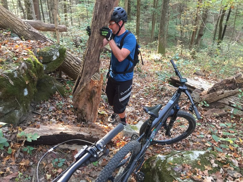 When riding the adventure trail taking a few minutes to clear some deadfall is always helpful for your next ride.