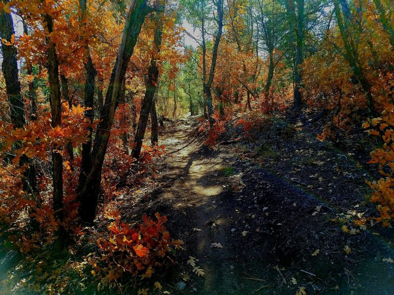 Southern crossing in the fall. Awesome trail.