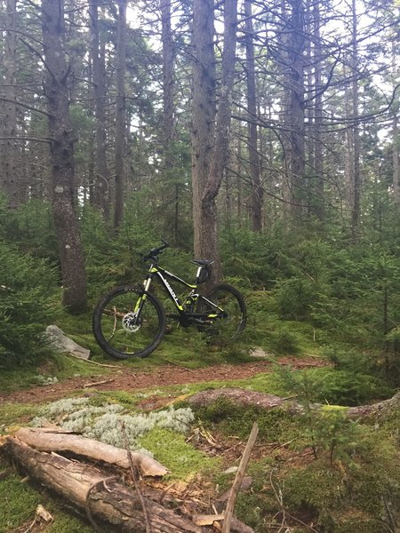 Awesome part of trail. Very lush forest area and excellent singletrack.
