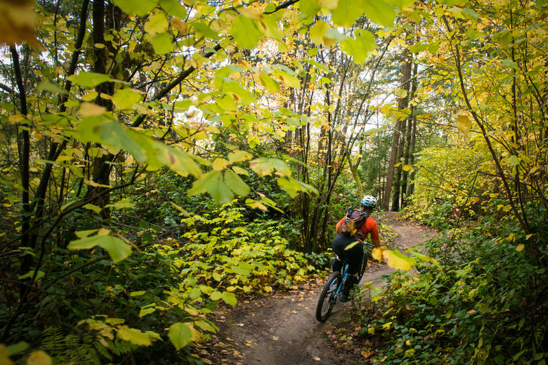 A fall pedal along Hustle & Flow at Swan Creek Park, WA.