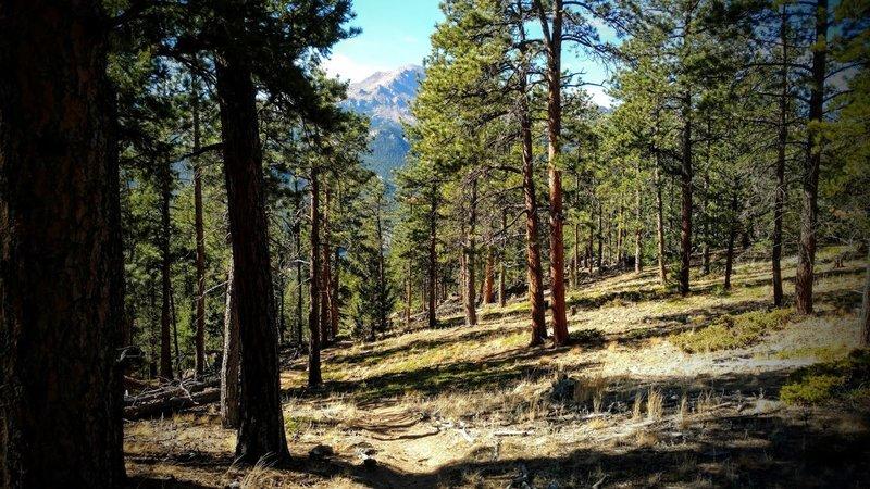 Pike's Peak from the Heiser Trail.