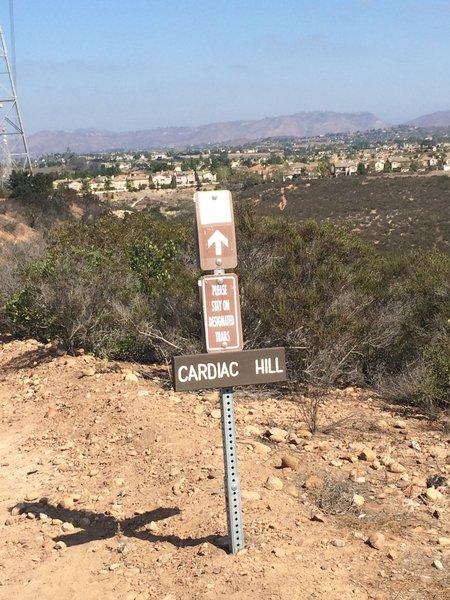 Cardiac Hill Trail - a steep, doubletrack descent.