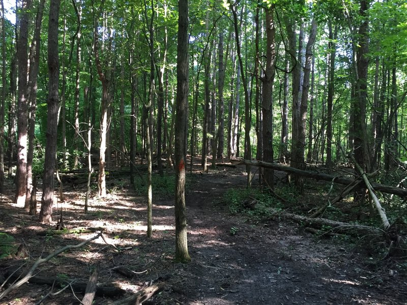 Section of woods.