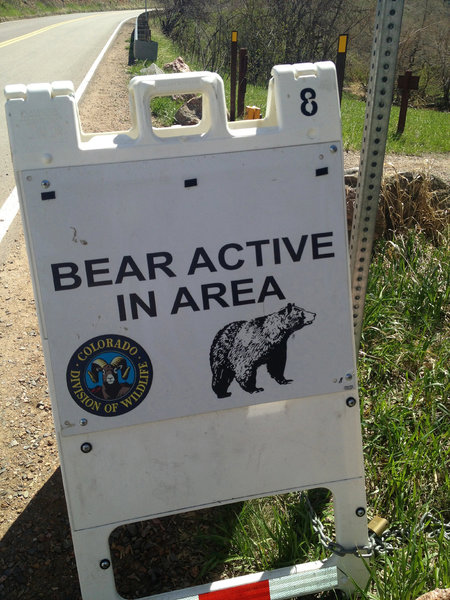 There's an honest-to-gawd bear, though it's not clear where his lair might be.