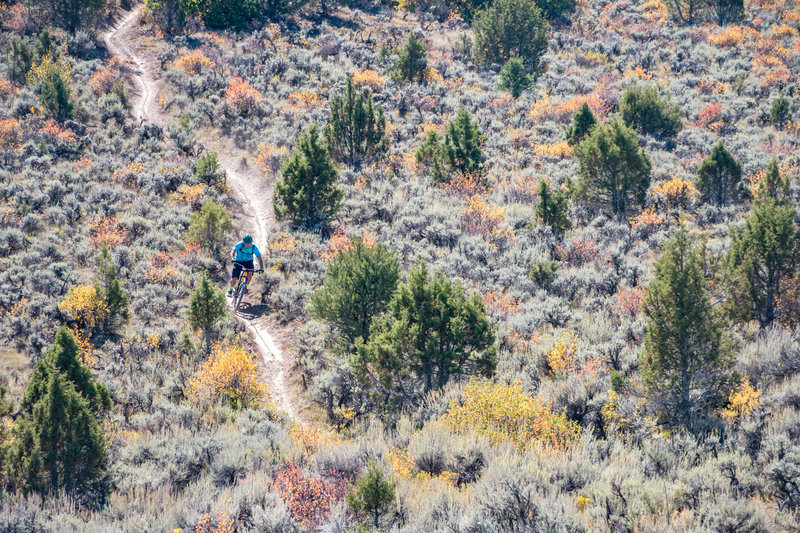 Great fall colors on Abrams Ridge in Eagle, CO.